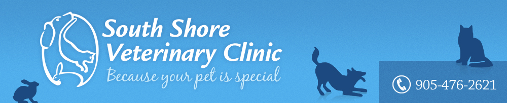 South Shore Veterinary Clinic – Keswick, Ontario