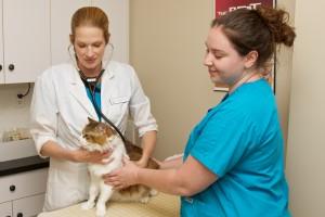 Dr Layton Clinic2