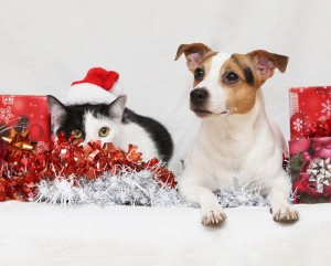 Christmas Pet Hazards